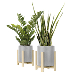 Set de 2 plantes avec pot design ciment