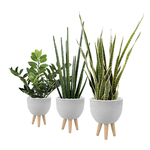 Set de 3 plantes artificielles et pot design ciment