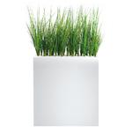 Séparation open-space herbes hautes