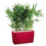 Bambou semi naturel pour bureau bac rouge