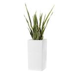 (Cube-Schio-Alto-[Blanc])-(Sanseveria)