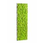 tableau-de-lichen-stabilise-vert-citron-demi-maxi