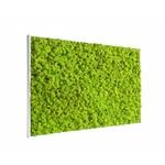 tableau-de-lichen-stabilise-vert-citron-maxi