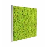 tableau-de-lichen-stabilise-vert-citron-60