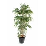 Bambou (120 à 180 cm)