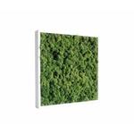 tableau-de-lichen-stabilise-vert-nature-40