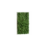 tableau-de-lichen-stabilise-vert-nature-rectangle