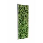 Tableau végétal en lichen vert naturel