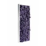 Tableau de lichen stabilisé violet