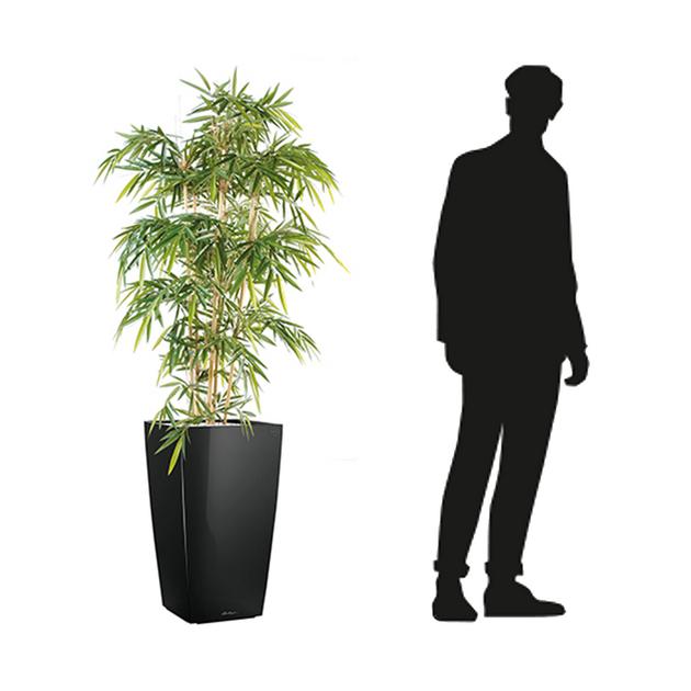 Dimensions-bambou-semi-naturel-pour-bureau