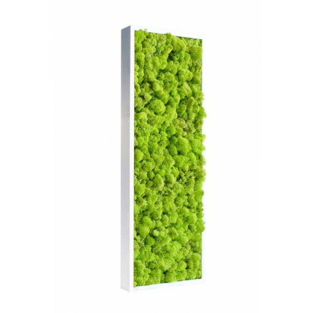 tableau de lichen stabilis vert citron pour bureau. Black Bedroom Furniture Sets. Home Design Ideas