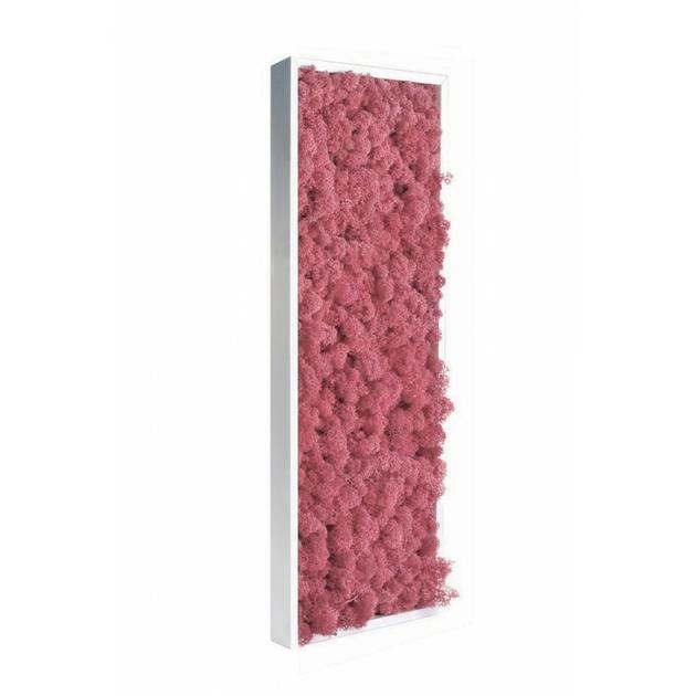 tableau-de-lichen-stabilise-rose-slim