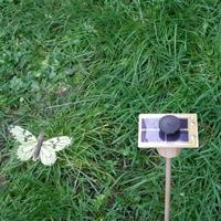 Kit PAPILLON solaire vert-citron 7cm