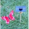 KIT Papillon Solaire Rouge 8cm grande cellule