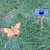 KIT Papillon Solaire Orange 8cm grande cellule