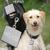 Plaque animal chien graver