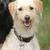 medaille-gravure-chien
