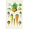 histoire-davant-torchon-coton-les-legumes-cavallini