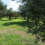 oliveraie Alpha to Omega