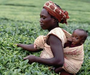 thé africain
