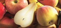 Fruits-du-verger