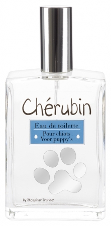 CHERUBIN eau de toilette chiot