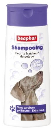 Shampooing Bulles - anti-odeurs