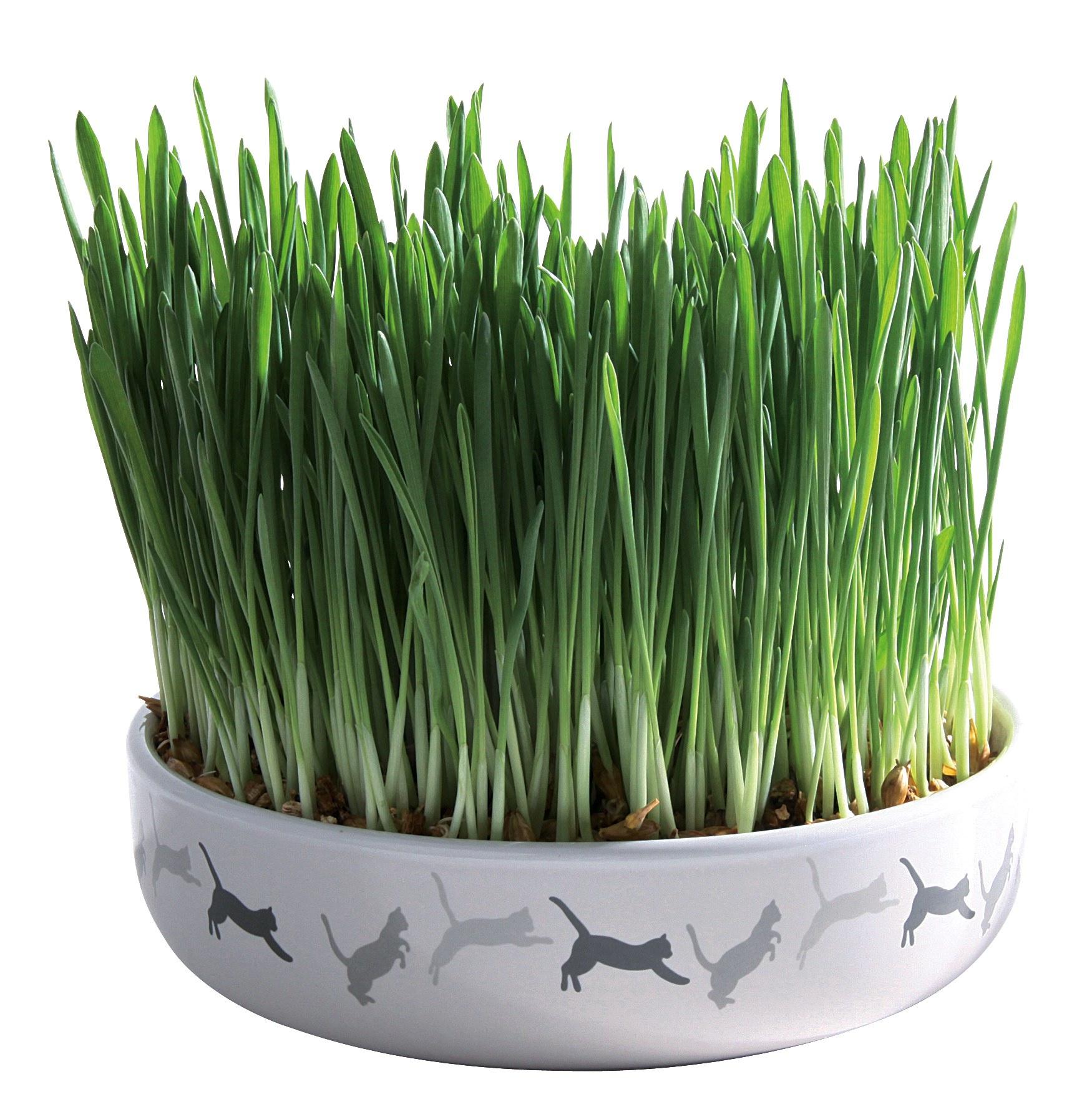 Ecuelle céramique avec herbe à chat