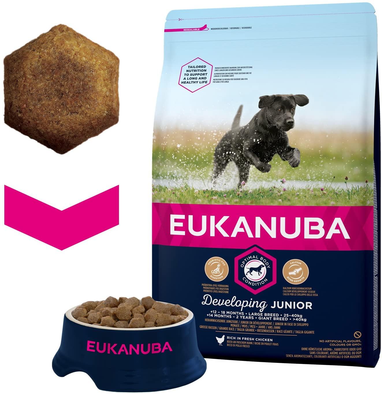 Eukanuba Croquettes pour Chien Junior chien de grande taille noszanimos