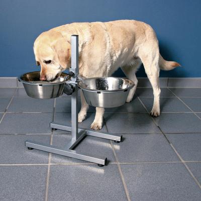 Bar pour chiens