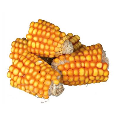 Morceaux d'épis de maïs