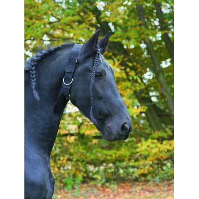 KERBL - Collier d'attache Cheval