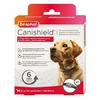 beapher canishield grand chien noszanimos