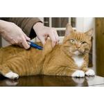 MSD caninsulin-vetpen-stylo-injecteur-dinsuline-pour-chien-et-chat NosZanimos 3