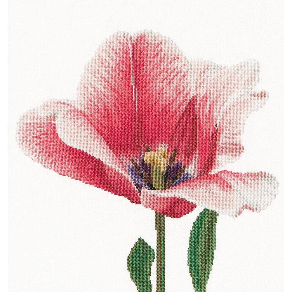 Thea Gouverneur  518  Tulipe