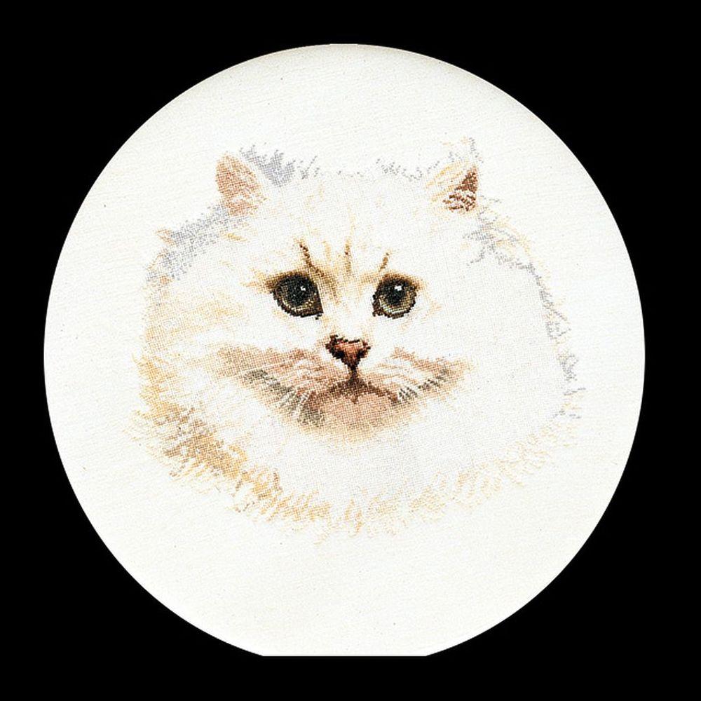 Thea Gouverneur  1045 Lin  Chat persan blanc