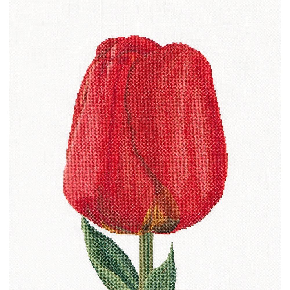 Thea Gouverneur  521 Aida  Tulipe