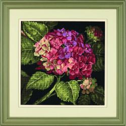 Hortensia en fleur - détail