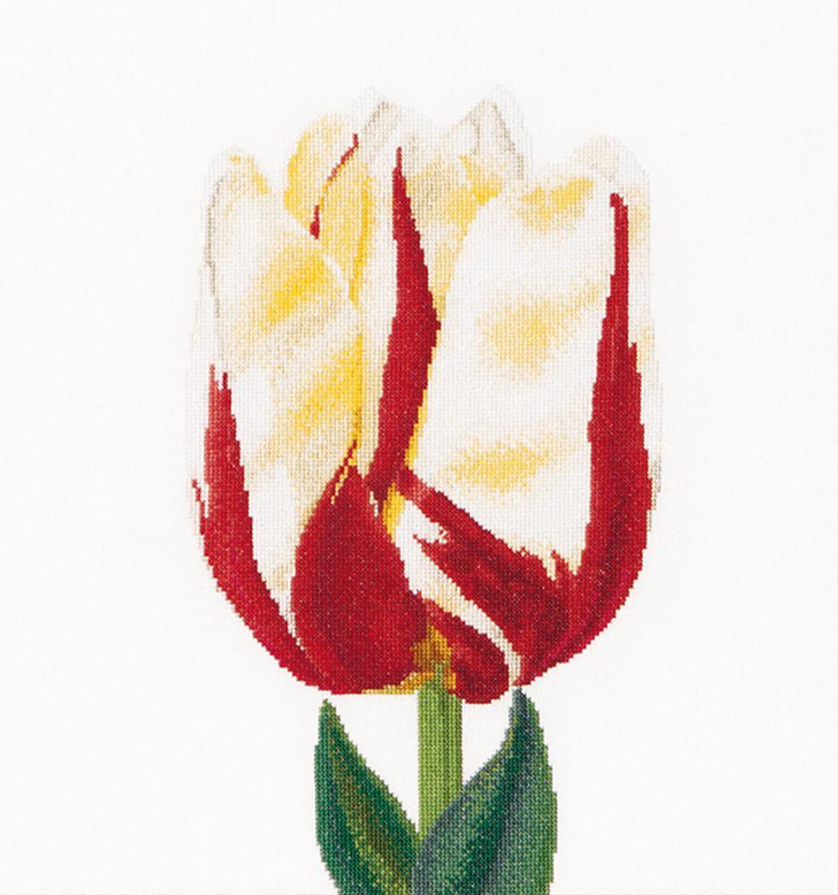 Thea Gouverneur  516  Tulipe