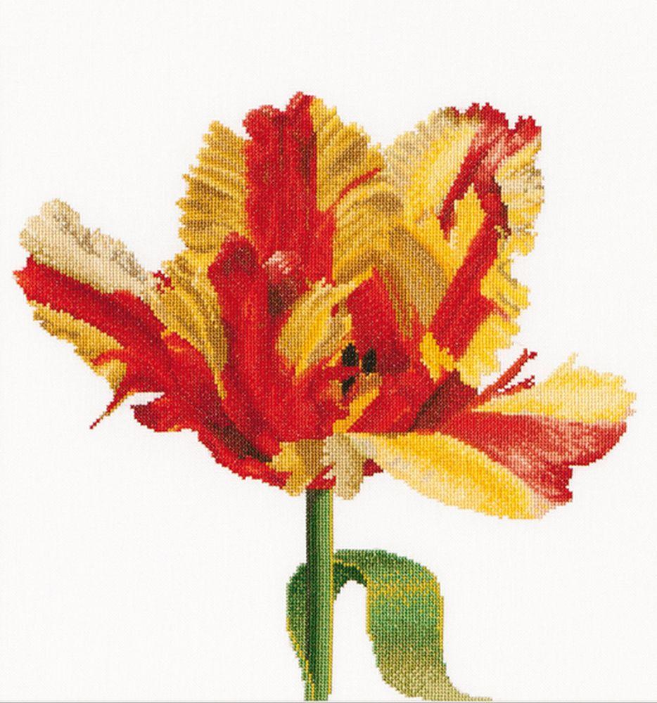 Thea Gouverneur  519  Tulipe Perroquet
