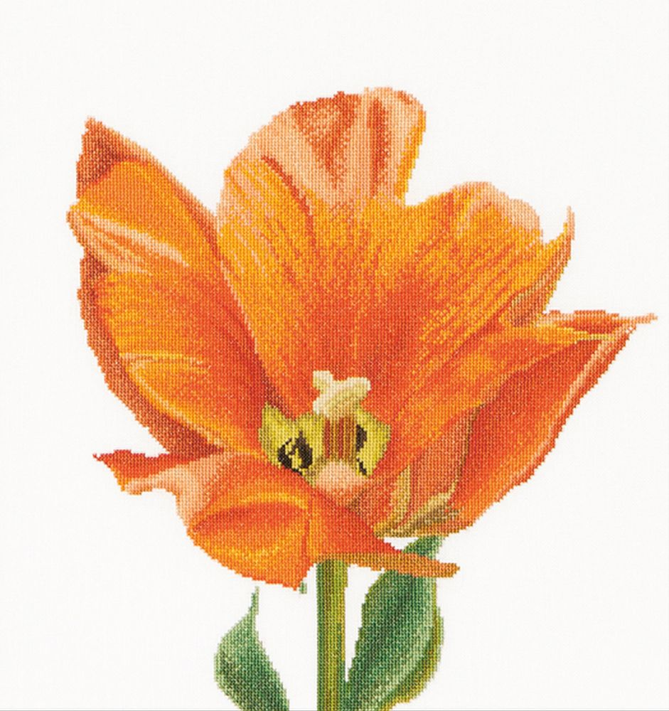 Thea Gouverneur  523  Tulipe