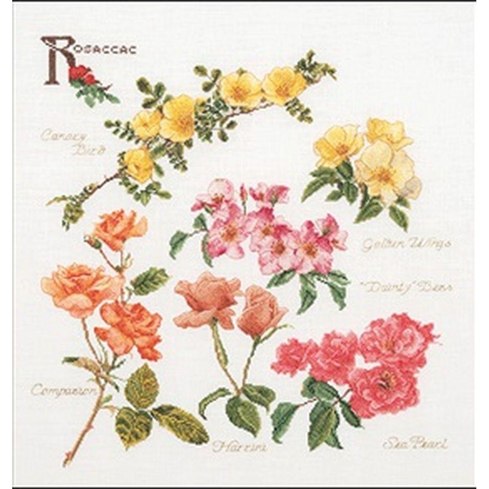 Roses  3066A  Thea Gouverneur