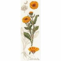 Riolis  Calendula souci  1798