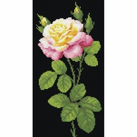 Rose rose AM0024 Riolis