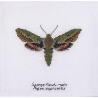 Papillon de nuit Euphorbe 565 Thea Gouverneur