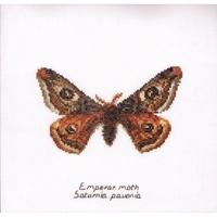 Papillon Empereur 562 Thea Gouverneur