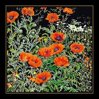 Coquelicots oranges - Kit Aïda noire - Thea Gouverneur 2062-05