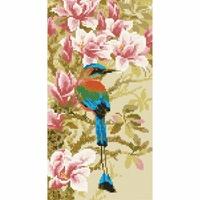 Oiseau tropical  AM0046  Riolis