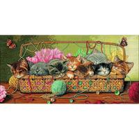 Portée de chatons  35184