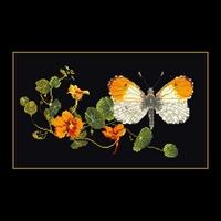 Thea Gouverneur  437.05  Papillon Nasturtium  Aïda noire